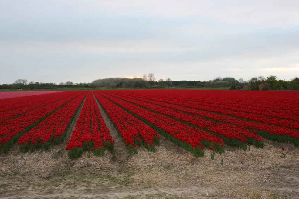 holland1jpg
