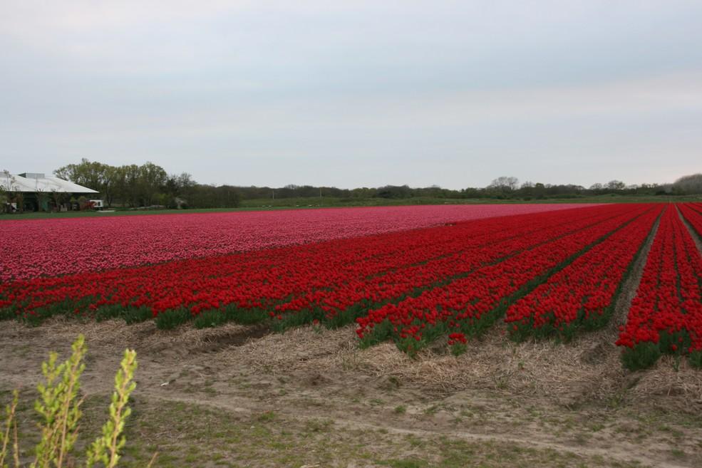 holland2jpg