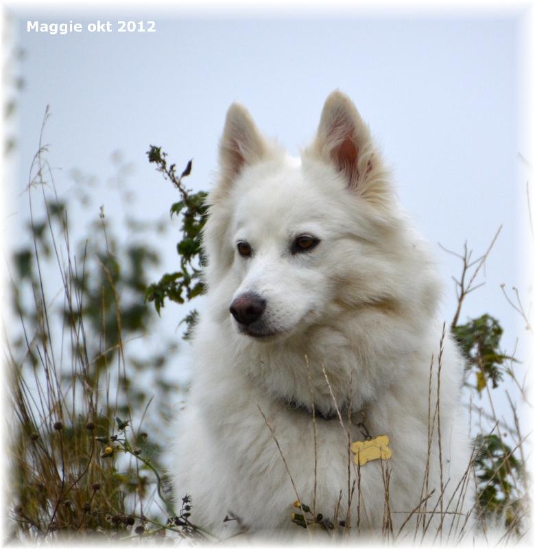 maggie_okt_2012_standard_e-mail_viewjpg