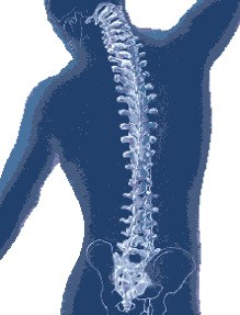 spine_292png