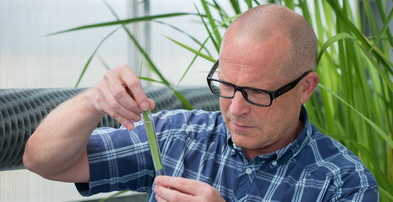 Professor Ole Pedersen inspection a rice leaf