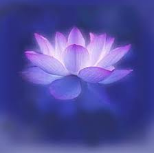 lotusblomma_1png